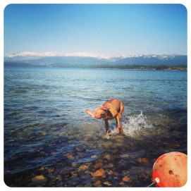 vizsla, dog breed, hunting dogs, mccall, idaho, thefirst2hours, swimming, exercise
